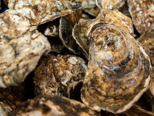 Plum Point Oysters from Narragansett Bay, RI